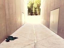 Abbandonato†‹tröja fotografering för bildbyråer
