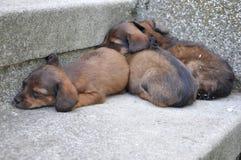 Abbandonato tre piccoli cuccioli Immagine Stock