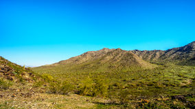 Abbandoni il paesaggio con i cactus del saguaro lungo la traccia nazionale vicino al San Juan Trail Head nelle montagne del parco Immagini Stock