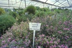 Abbandoni l'esperimento della serra al laboratorio di ricerca ambientale dell'università dell'Arizona in Tucson, AZ Immagine Stock