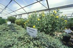 Abbandoni l'esperimento della serra al laboratorio di ricerca ambientale dell'università dell'Arizona in Tucson, AZ Fotografia Stock