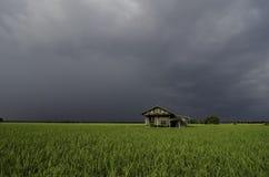 Abbandoni la casa di legno in mezzo alla risaia con il fondo drammatico della nuvola Immagine Stock