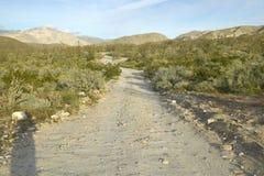 Abbandoni la strada in primavera al canyon del coyote, parco di stato del deserto di Anza-Borrego, vicino a Anza Borrego Springs, Fotografie Stock