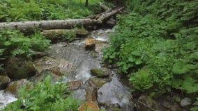 Abbassandosi con acqua in cascata della foresta video d archivio