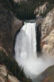 Abbassi le cadute, l'artista Canyon, parco nazionale di Yellowstone fotografia stock
