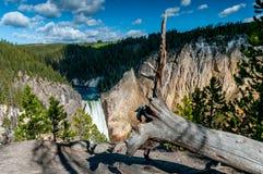 Abbassi le cadute nel parco nazionale di Yellowstone fotografie stock
