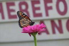 Abbastanza nel colore rosa Immagini Stock Libere da Diritti
