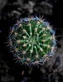 Abbastanza poco cactus rotondo fotografia stock