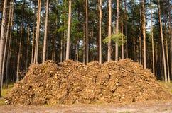 Abbattimento della foresta Fotografia Stock