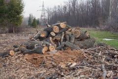 Abbattimento illegale degli alberi in ecologia forestale fotografia stock libera da diritti
