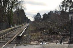 Abbau der Vegetation in Berlin als Vorbereitung für die Bahnverbindung zwischen Berlin und Dresden Stockbild