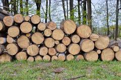 Abbau des Stands der Bäume Stockfotos