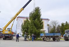 Abbau des Weihnachtsbaums Lizenzfreie Stockbilder