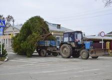 Abbau des Weihnachtsbaums Lizenzfreie Stockfotos