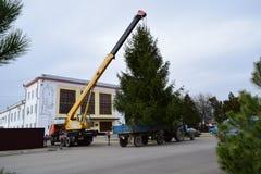 Abbau des Weihnachtsbaums Stockbilder