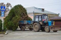 Abbau des Weihnachtsbaums Lizenzfreies Stockbild