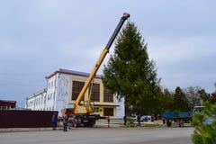 Abbau des Weihnachtsbaums Stockfotos
