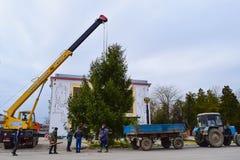 Abbau des Weihnachtsbaums Stockfotografie