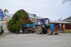 Abbau des Weihnachtsbaums Stockfoto
