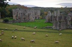 Abbaye d'Easby près de Richmond Yorkshire images stock