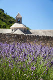 Abbaye de Sénanque with blooming lavender field Royalty Free Stock Photo