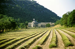 Abbaye de Senanque Stockbild