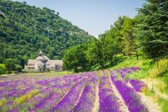 Abbaye de Senanque, alfazema de Provence em França imagens de stock