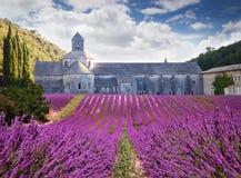 Abbaye de Senanque avec le lavander de floraison france Image stock
