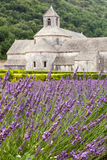 Abbaye de Senanque i den Vaucluse regionen, Provenc Royaltyfri Foto