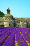 Abbaye de Senanque med lavendelfältet Royaltyfri Fotografi