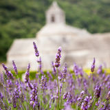 Abbaye de Senanque mit Lavendelfeld, Provence Stockbilder