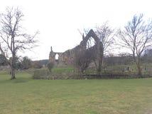 Abbazia di Bolton, Yorkshire del nord Fotografia Stock