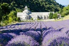 Abbazia di Senanque, Provenza, Francia Fotografia Stock
