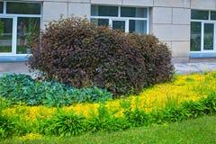 Abbellimento del giardino botanico siberiano centrale Novosibirs Fotografia Stock Libera da Diritti