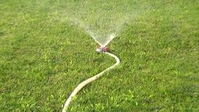 Abbellimento dell'impianto di irrigazione con il tubo di innaffiatura e lo spruzzatore di diffusione agli impianti stock footage