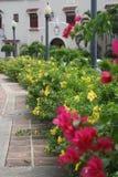 Abbellimento tropicale del marciapiede Fotografia Stock