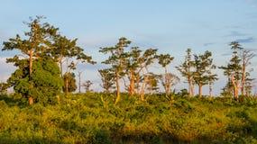 Abbellisca in Angola con gli alberi ed i cespugli contro cielo blu durante la luce di pomeriggio Immagini Stock