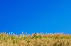 Abbellisca, bei colline dell'erba e cielo blu in primavera Immagine Stock Libera da Diritti