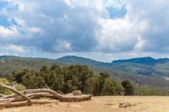 Abbellisca con erba, gli alberi, piante, tagli l'albero di legno, la montagna, il cielo scuro, Ooty, India, il 19 agosto 2016 Immagini Stock Libere da Diritti