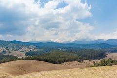 Abbellisca con erba, gli alberi, piante, tagli l'albero di legno, la montagna, il cielo scuro, Ooty, India, il 19 agosto 2016 Fotografia Stock