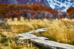 Abbellisca con gli alberi di autunno, il cielo nuvoloso e la neve sulle montagne nel parco nazionale di Los Glaciares del parco n fotografia stock libera da diritti
