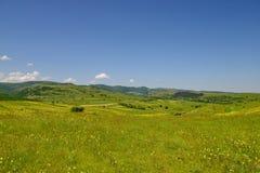 Abbellisca con i fileds dei fiori, delle colline e del cielo blu gialli Fotografie Stock