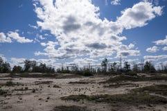 Abbellisca con i pini, gli abeti rossi, i larici e le betulle Giorno di estate luminoso con cielo blu, nuvole e giallo sabbia bia Fotografie Stock