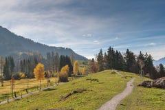 Abbellisca con i prati verdi sopra il lago Lucerna, le alpi, Svizzera Immagine Stock