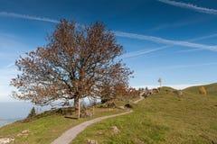 Abbellisca con i prati verdi sopra il lago Lucerna, le alpi, Svizzera Immagini Stock