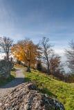 Abbellisca con i prati verdi sopra il lago Lucerna, le alpi, Svizzera Fotografia Stock Libera da Diritti
