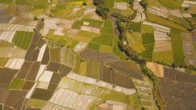Abbellisca con i terreni coltivabili ed il campo Bali, Indonesia del terrazzo del riso Immagine Stock Libera da Diritti