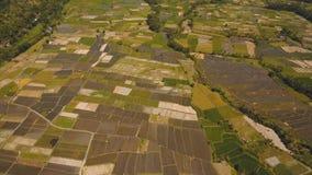 Abbellisca con i terreni coltivabili ed il campo Bali, Indonesia del terrazzo del riso Immagine Stock