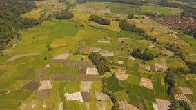 Abbellisca con i terreni coltivabili ed il campo Bali, Indonesia del terrazzo del riso Immagini Stock Libere da Diritti