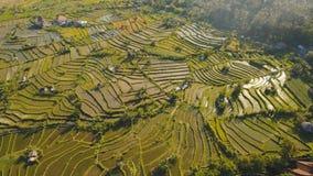 Abbellisca con il campo Bali, Indonesia del terrazzo del riso Fotografia Stock